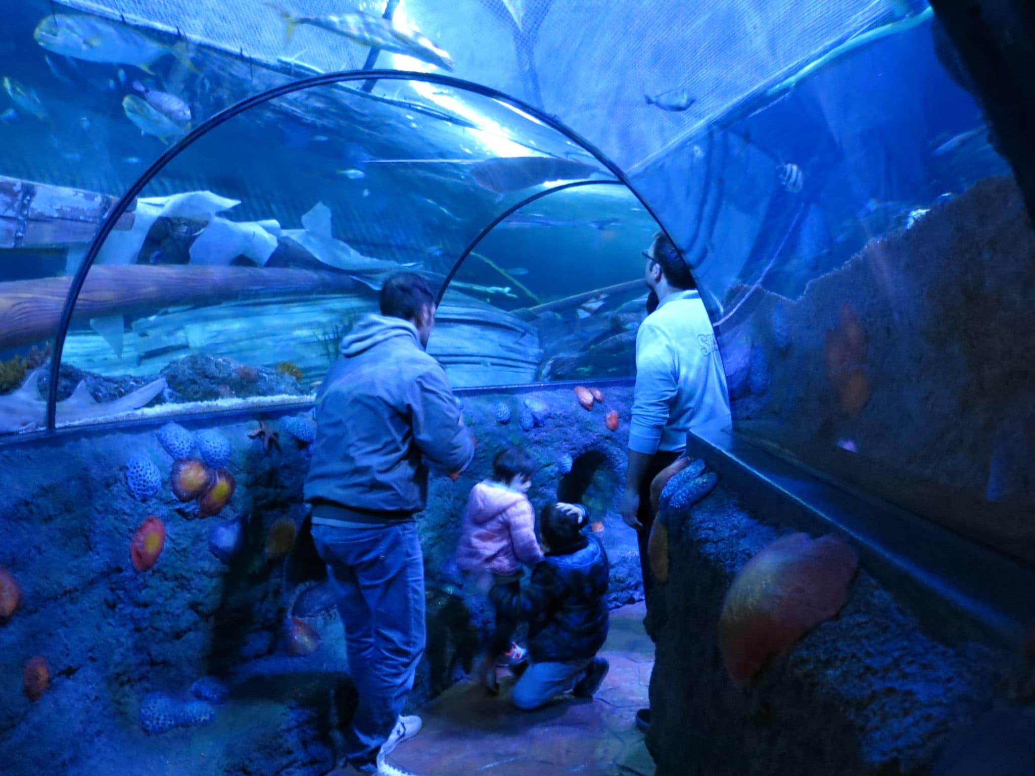 gardaland sea life aquarium
