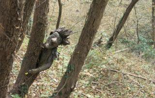 spirito-del-bosco-canzo