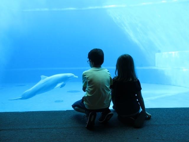 visita acquario di genova con bambini