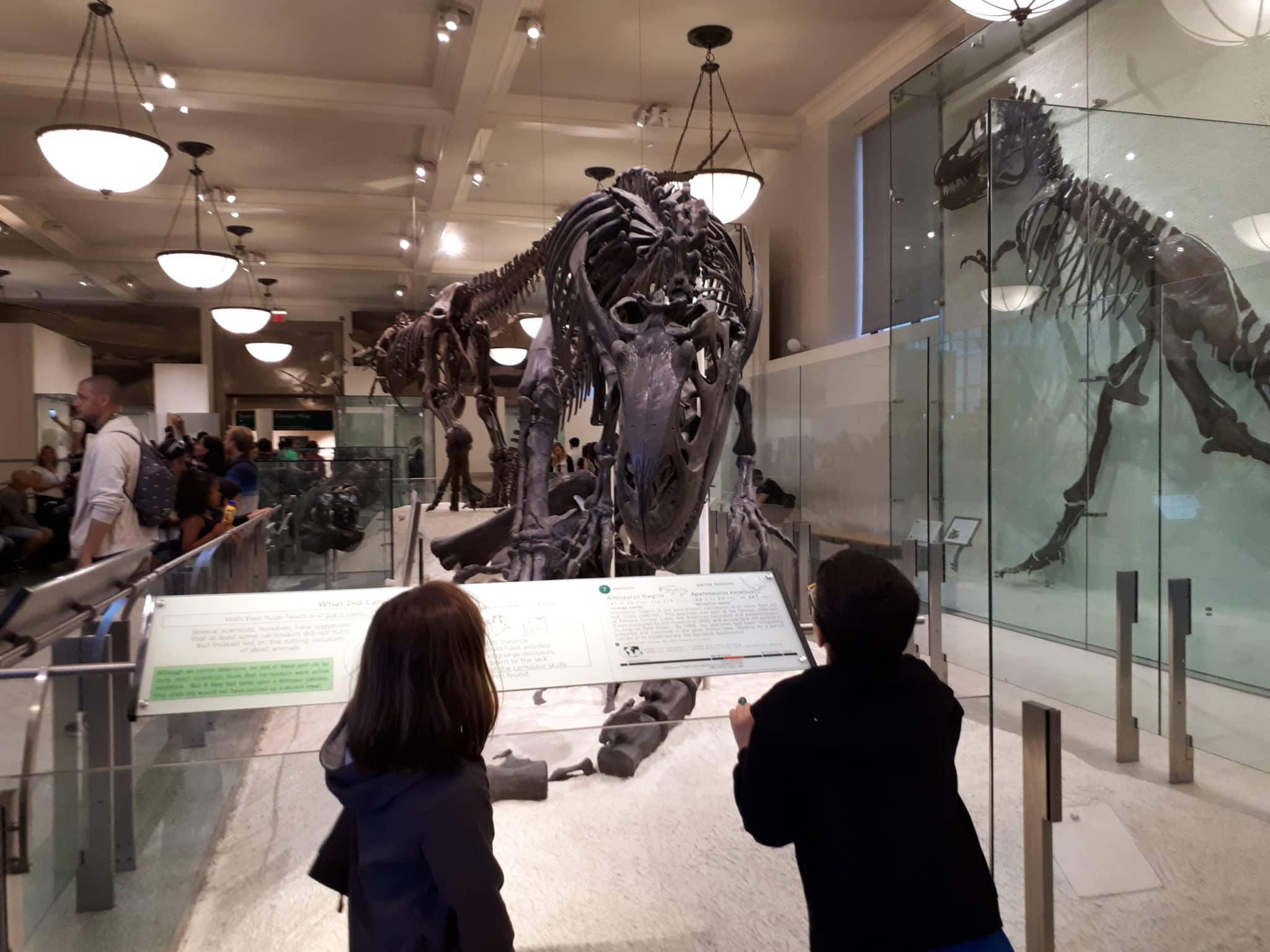 Museum Of Natural History New York Prezzi