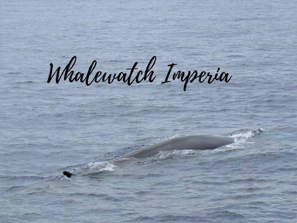 escursione con whalewatch imperia