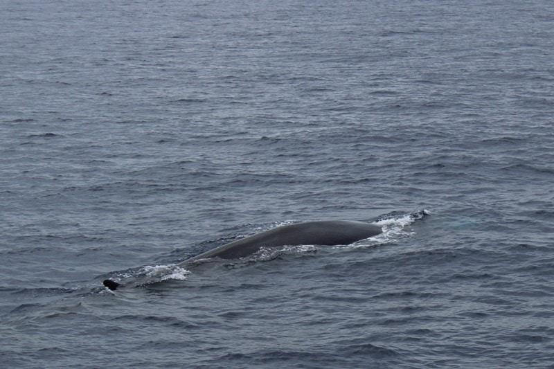 escursione con whalewatch imperia