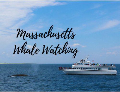 Massachusetts Whale Watching: dove vedere le balene a Cape Cod?
