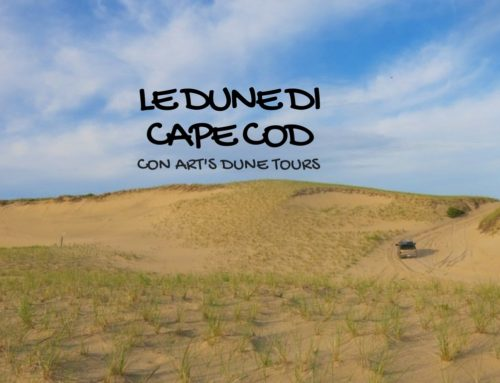 Massachusetts: sulle dune del Cape Cod National Seashore Park con le escursioni Art's Dune Tours