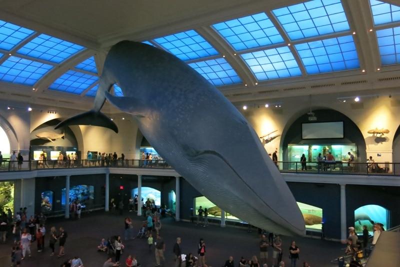 Museo Storia Naturale New York.Il Museo Di Storia Naturale Di New York Con I Bambini Una Giornata