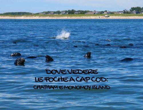 Dove vedere le foche a Cape Cod: Chatham e Monomoy Island