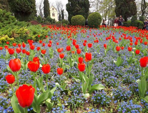Visita al Parco Sigurtà: i colori della Tulipanomania