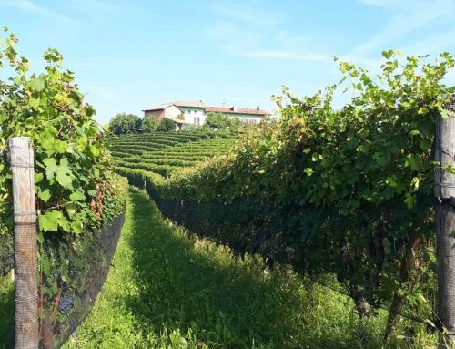 Weekend nelle Langhe in autunno con bambini
